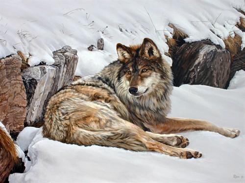 Jon Ren Wildlife Art News Amp Events 2010 Timber Wolf