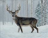 Winter Buck
